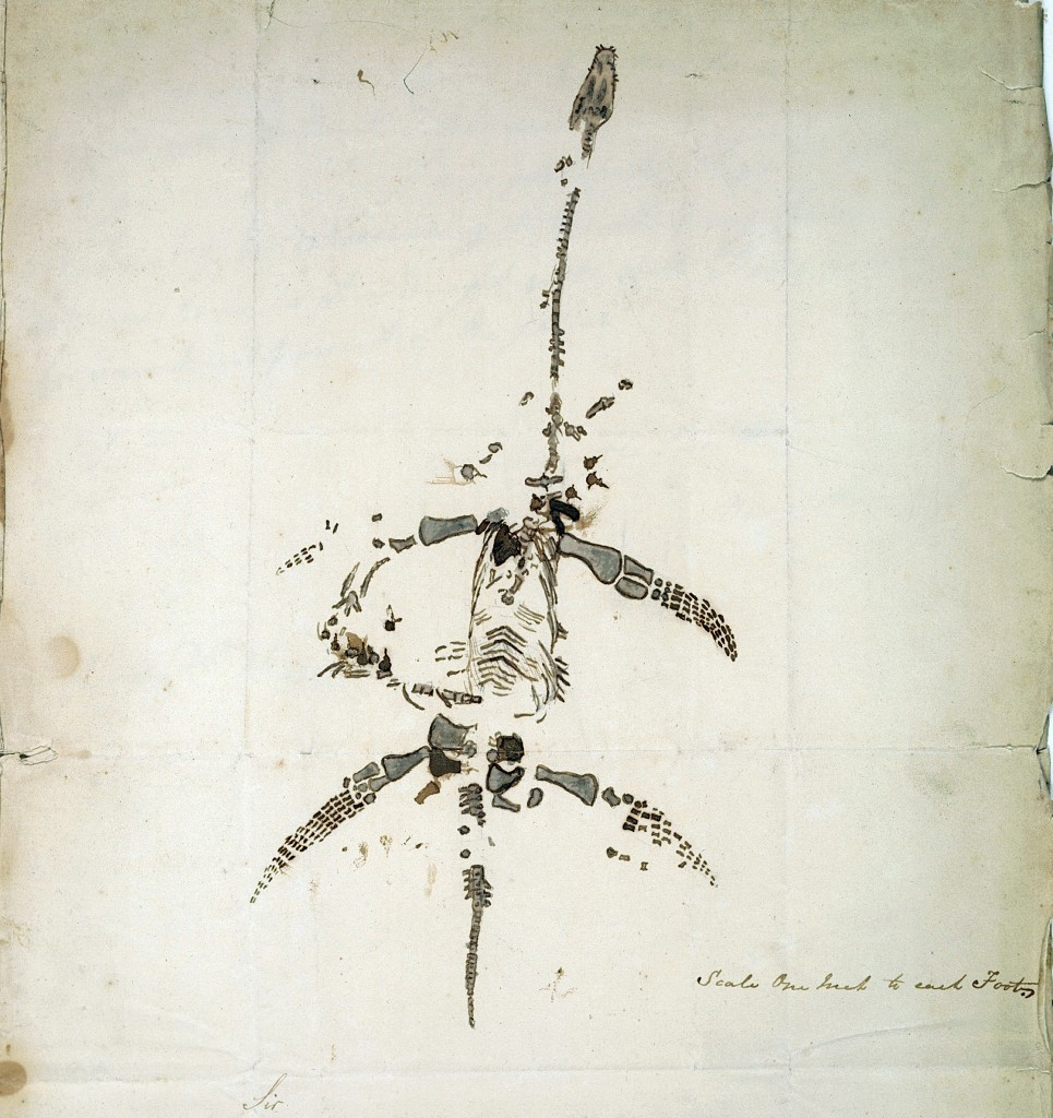 A sketch of a plesiosaur skeleton that Mary Anning drew herself