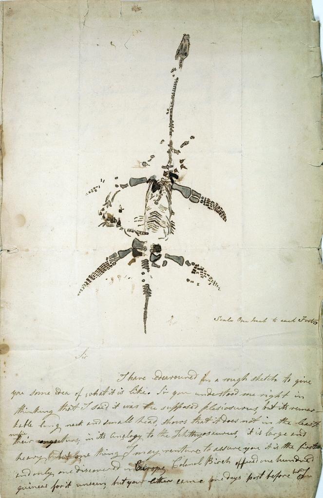 Handwritten letter accompanied by a sketch of a plesiosaur fossil skeleton