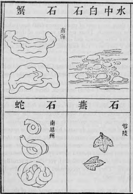 Sketch of four fossils, oysters, clams, whirling tubes, and leaf-like organisms with Chinese writing